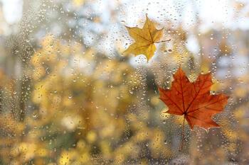 Regndråper og falne løv på et vindu.